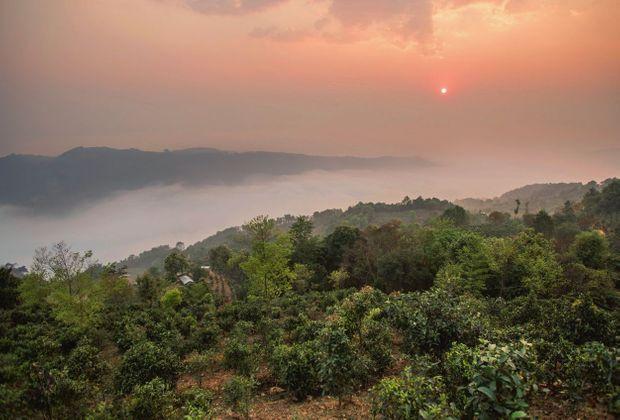 Joyau de l'Asie, la province chinoise du Yunnan abrite les forêts de théiers les plus anciennes.