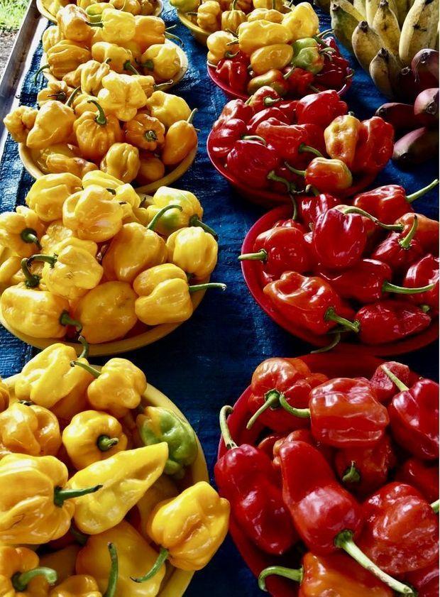L'éclat des poivrons sur le marché de Cayenne. Sans ajout de lumière! Mars 2018