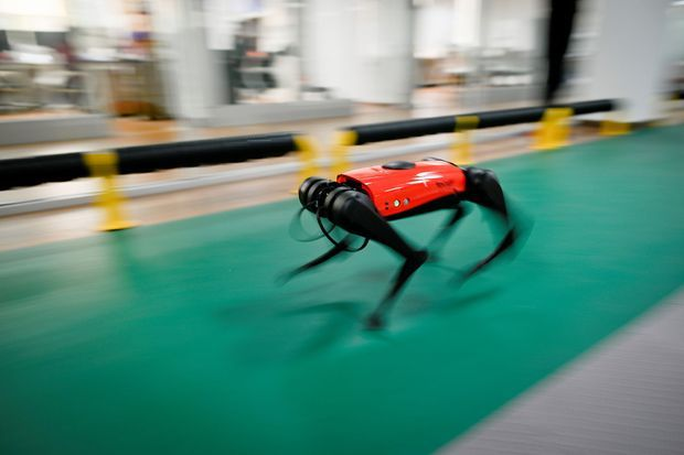 L'AlphaDog peut courir jusqu'à 15km/h.