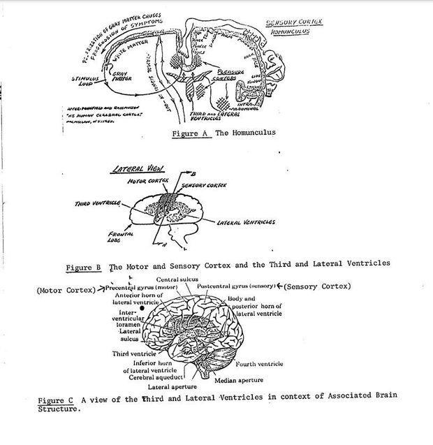 A l'appui des théories du Gateaway, des schémas du cerveau.