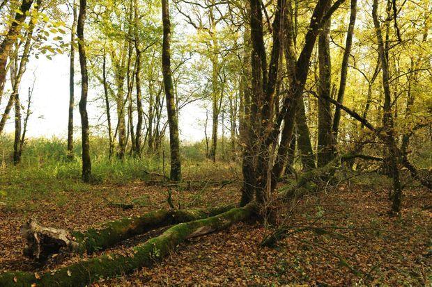 L'endroit précis où à été découvert le corps d'Alexia Daval dans la forêt, près de la ville de Gray.