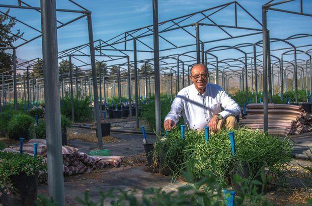 Réfugié au Liban, tout proche, Ali Shehadeh était responsable de la banque de graines syrienne. Il travaille aujourd'hui à quelques kilomètres de la frontière, avec ses confrères libanais.