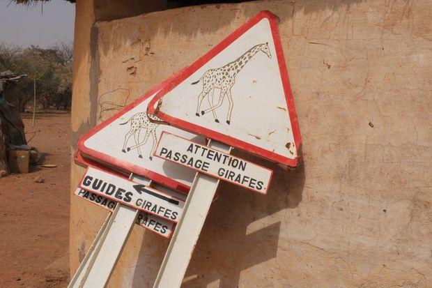 A Kouré, des panneaux de signalisation préviennent les automobilistes principaux prédateurs des girafes du Niger.