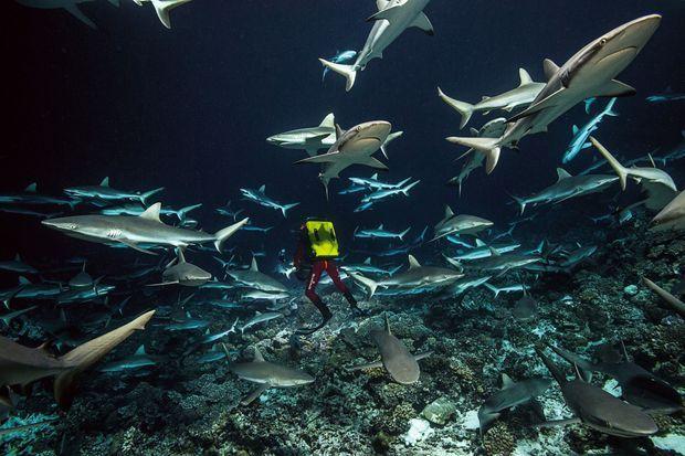 Avec l'équipe de Laurent Ballesta dans le monde multicolore de la biodiversité marine