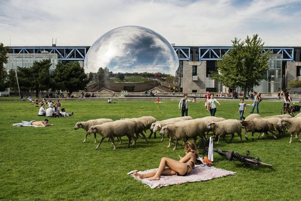 Septembre 2018. Passage des moutons des Bergers urbains devant la Géode, à la Villette, direction la ferme urbaine de Saint-Denis.
