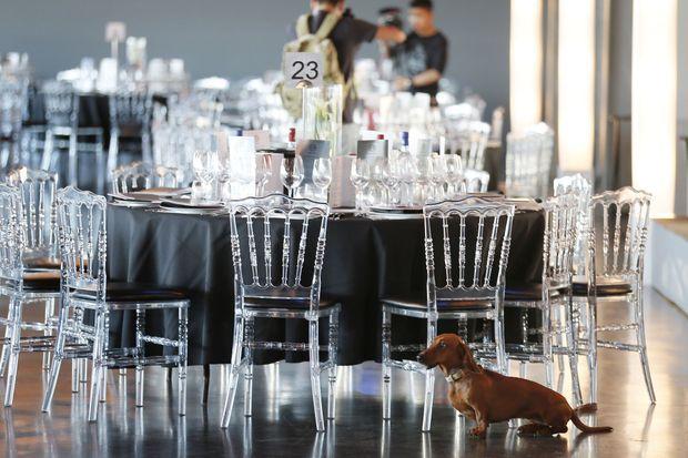 Le chien du prince Henrik de Danemark à Bordeaux, le 23 juin 2016