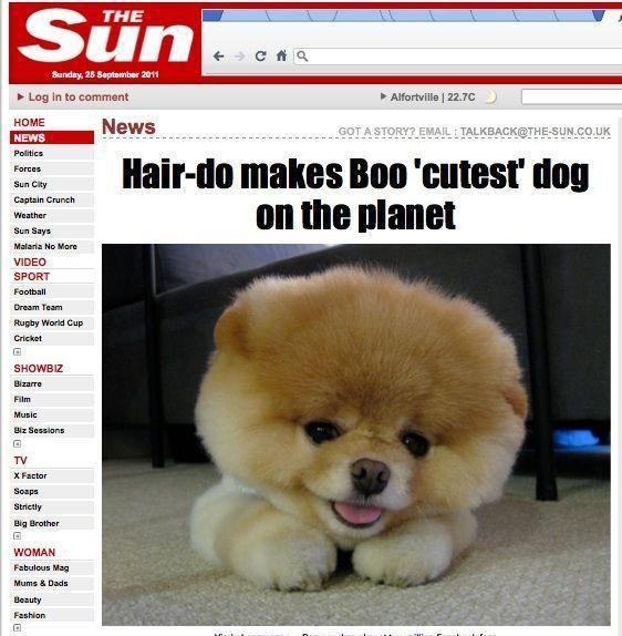 Boo le chien-