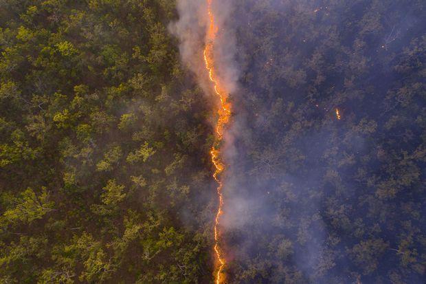 """""""Bushfire"""" de Robert Irwin."""