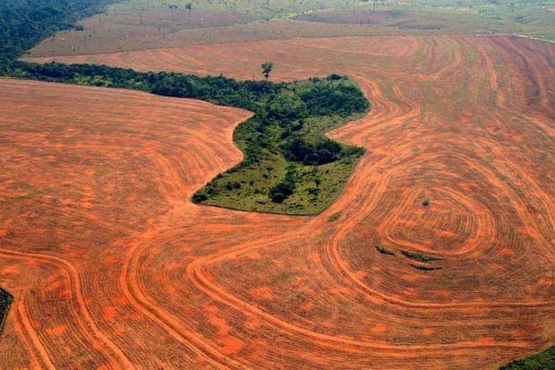 Une forêt presque rasée.