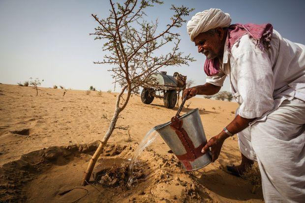 Ce fermier, aujourd'hui âgé de 79 ans, lutte pour la reforestation du désert du Thar, l'un des plus arides de la planète, qui menace d'ensevelir les villages. Depuis 1973, il a déjà planté et entretenu 30 000 arbres partout dans le Rajasthanck Vogel