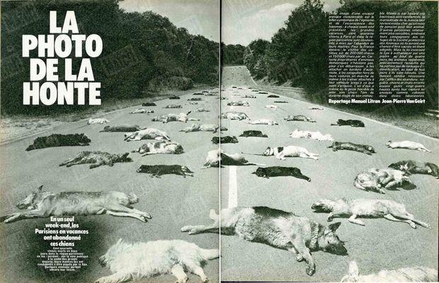 """«Cent quarante chiens morts en deux jours dans la région parisienne : en les """"perdant"""" sur la voie publique à la veille des grands départs, leur maîtres les ont condamnés à être piqués par la SPA (en vertu de la loi de l'époque, ndlr). Quelques animaux ont encore leur laisse.» (Paris Match n°1625, 18 juillet 1980)"""