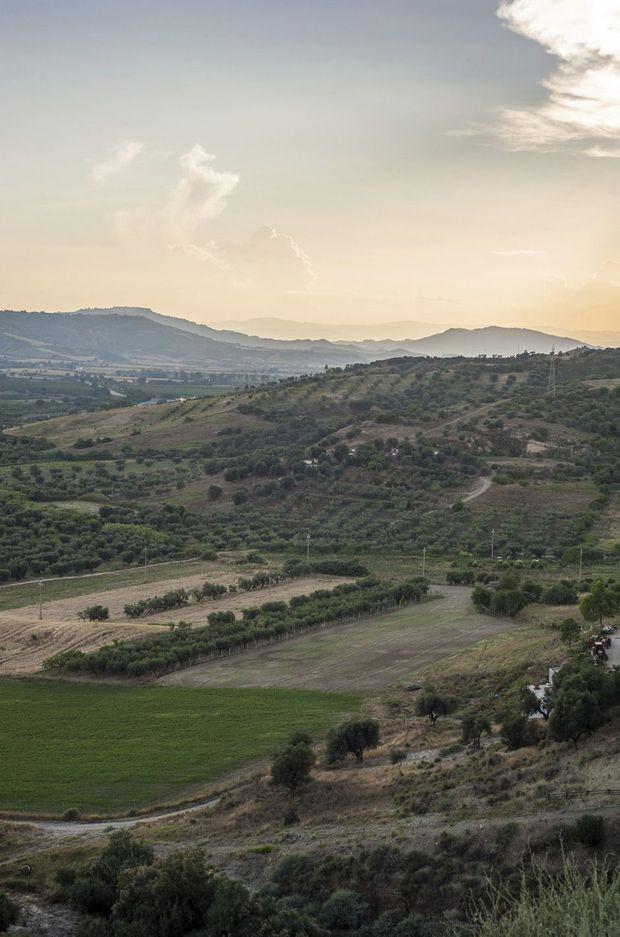 Douceur des paysages plantés de vignes et d'oliviers centenaires.