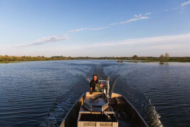 Dans la Loire, le silure a pris ses aises, parmi d'autres poissons. Certains prétendent qu'il les dévore, d'autres assurent que non.