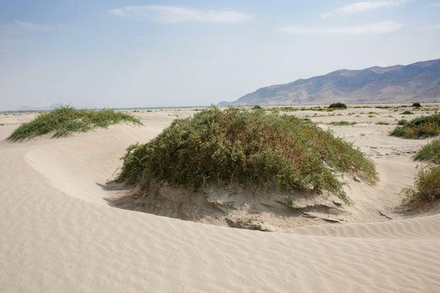 Dans le désert au nord-ouest, on tente de stopper l'érosion en cultivant des plantes.