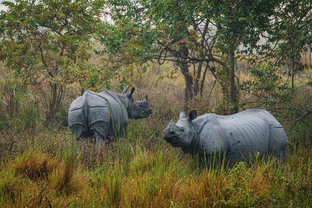 Deux des pensionnaires du parc, une mère et son petit. La réserve de 860 kilomètres carrés abrite plus de 2400 rhinos