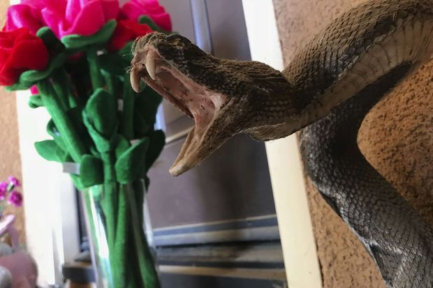 Devant l'entrée de la famille Turpin, un menaçant serpent.