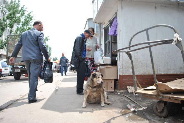Si les Roumains ont été contraints de séparer de leurs chiens pour habiter dans le Bucarest de Ceausescu, ils ont gardé l'habitude de les nourrir.