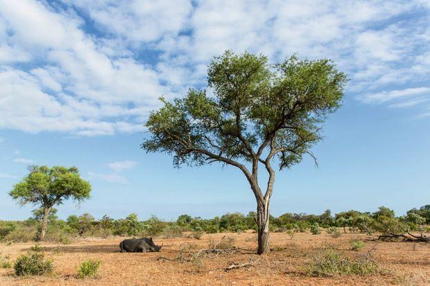 Ces paysages de savane abritent une faune en grand danger. Les braconniers chassent surtout le rhinocéros, dont la corne se vend plus cher que l'or.