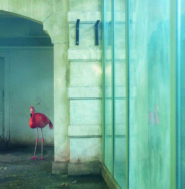 « Flamant bleu », d'Eric Pillot.