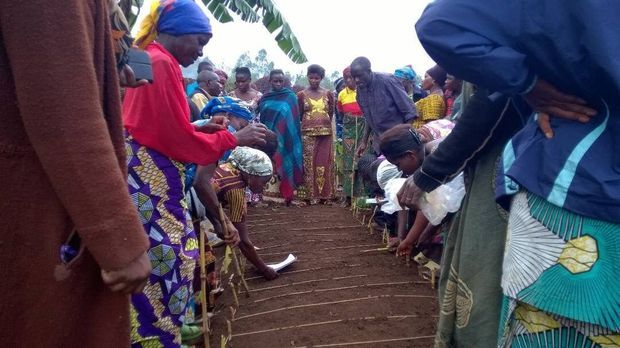 Dans la province du Sud-Kivu (RDC), des femmes apprennent à cultiver l'Artemisia.