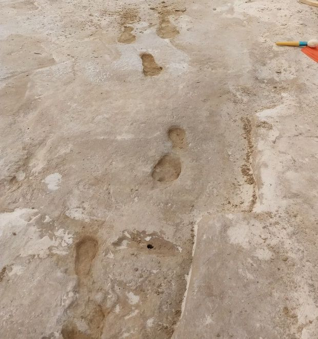 fossil print trackway