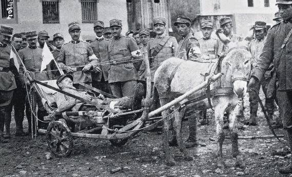 Mulet de trait de l'armée italienne, 1915.