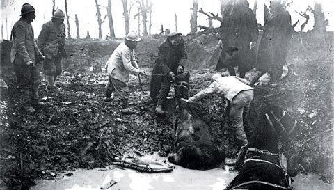 Ces chevaux de l'armée française peinent à sortir d'un trou boueux où ils sont enlisés.
