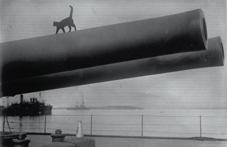 Ce chat perché sur le fût d'un canon est devenu la mascotte du « Queen Elizabeth » (1915).