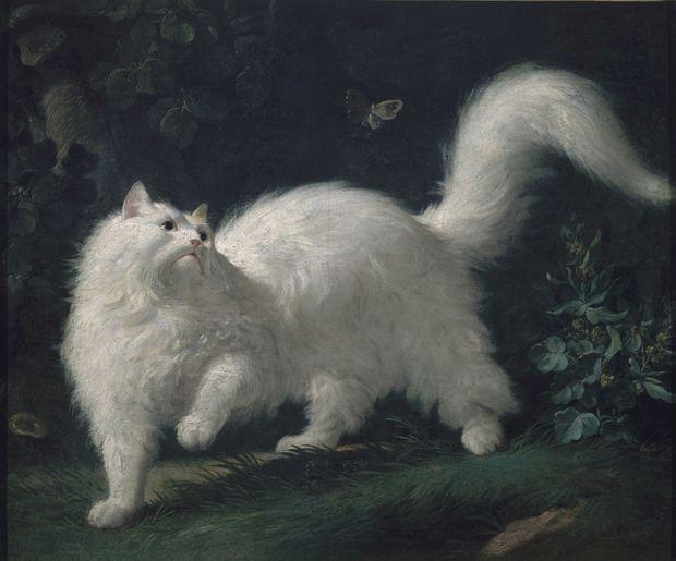 «Chat angora blanc, guettant un papillon» par Jean-Jacques Bachelier (musée Lambinet à Versailles)
