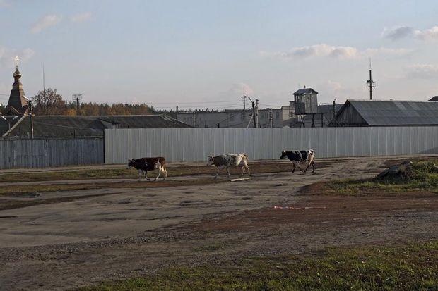 C'est dans ce camp médicalisé, LPU-21, près du village de Barachevo, dans le district de Zubova Polyana, en Mordovie, que Nadia, des Pussy Riot, a été transférée. Il y a une église orthodoxe dans chacune des colonies pénitentiaires de Russie.