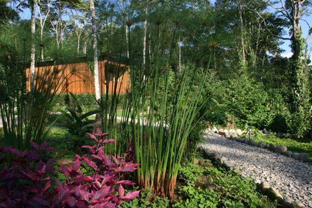 La nature est reine, le « Hamadryade Lodge » la célèbre.