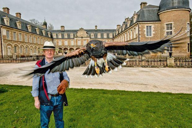 Hubert et Harry, sa buse de Harris, dans le parc du château de Pierre-de-Bresse, où l'association organise des sessions avec de jeunes handicapés.