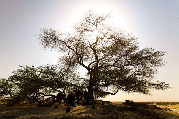 L'arbre de la vie.