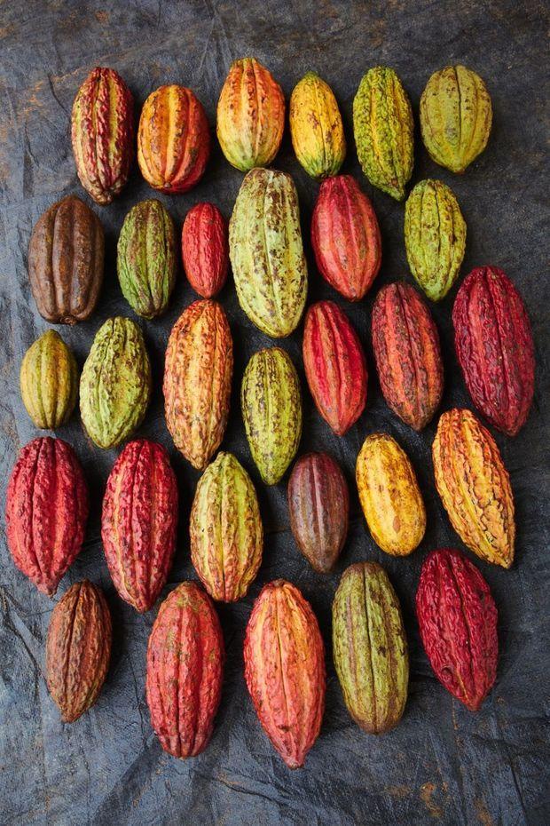 La gamme des couleurs des cosses, gage d'une grande richesse aromatique du chocolat et c'est bon pour la biodiversité de la forêt !