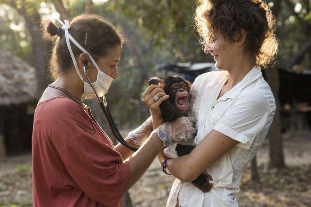 La vétérinaire espagnole Christina Collell ausculte Kanda, un petit nouveau. Pour chaque pensionnaire, une photo d'identité et un nom.