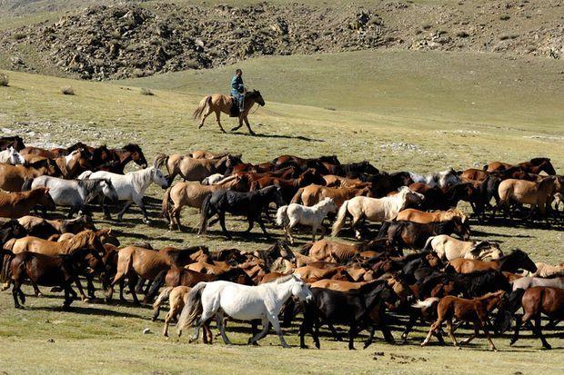 Le cavalier mongol, d'Hamid Sardar