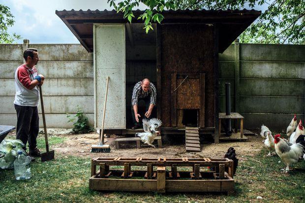 Le travail de la terre permet un retour à l'emploi des précaires. Jean-Paul et Silvio, en contrat d'insertion, s'occupent des poules de races régionales, en voie d'extinction.