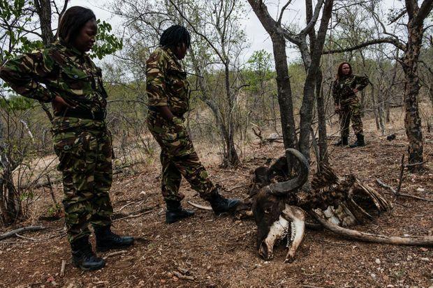Les rangers devant une carcasse de buffle, tué et dévoré par des lions, ces grands prédateurs qu'elles s'efforcent de protéger.