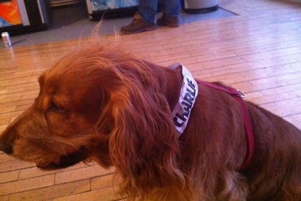 """Lila, la chienne mascotte de """"Charlie Hebdo"""""""