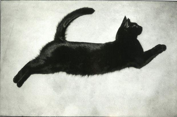 Macao, le chat qui vole. 1990. Benoit avait cité son félin préféré dans les remerciements du livre « La photo en première ligne ».