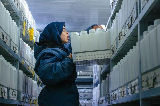 Dans la plaine de la Bekaa, les graines syriennes ont trouvé refuge dans un centre de recherche. Stockées à – 18 °C, elles sont inventoriées, et certaines expédiées en Norvège. A trois reprises, des échantillons sont revenus pour duplication et distribution aux agriculteurs.