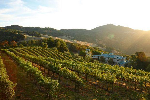 La villa est notamment composée d'un immense vignoble