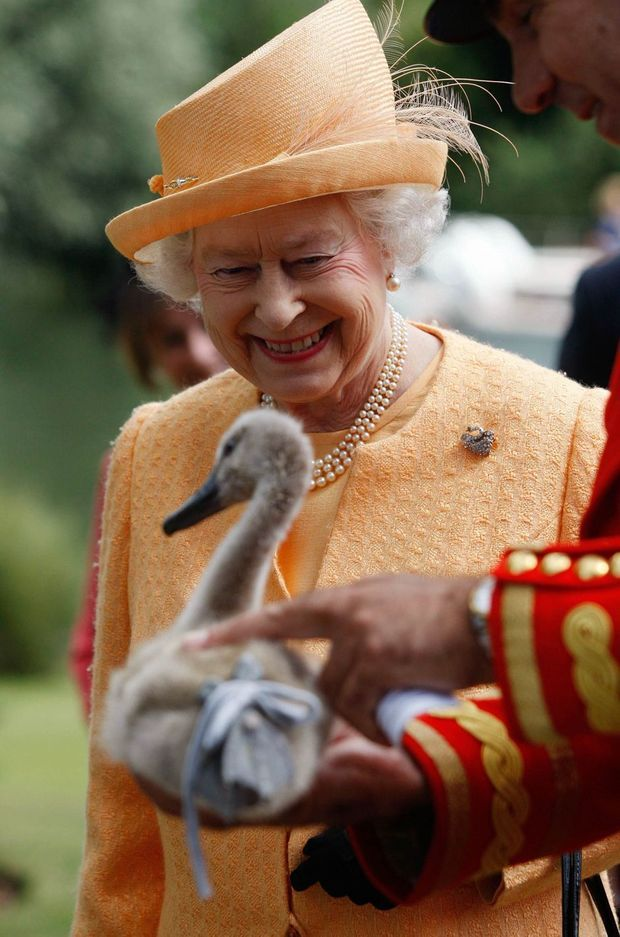 La reine Elizabeth II lors de la cérémonie «Swan Upping» de recensement des cygnes de la Tamise, le 20 juillet 2009