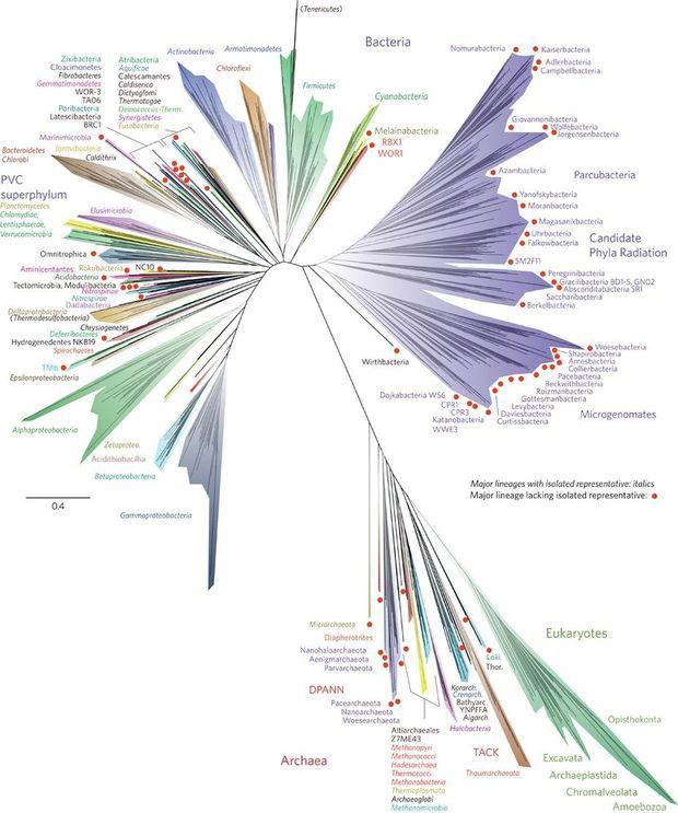 Le nouvel arbre de la vie créé par les chercheurs