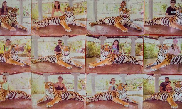 Pour dix dollars, la photo souvenir avec un tigre retenu par une chaîne qui l'empêche de se lever, au zoo de Phuket (Thaïlande).