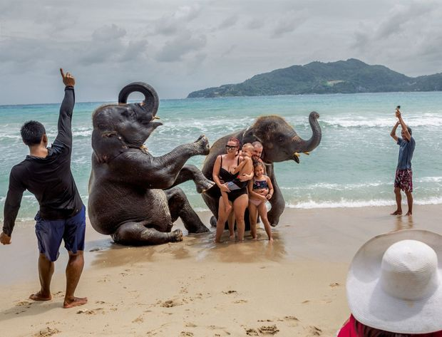 Baignade avec les éléphants, un cirque bien rodé sur la plage Lucky Beach de l'île de Phuket, en Thaïlande.