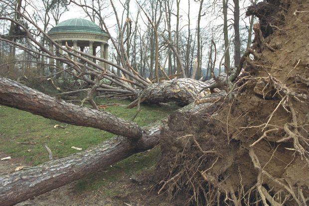 Le temple de l'Amour, en lendemain de la tempête dans le domaine de Trianon.