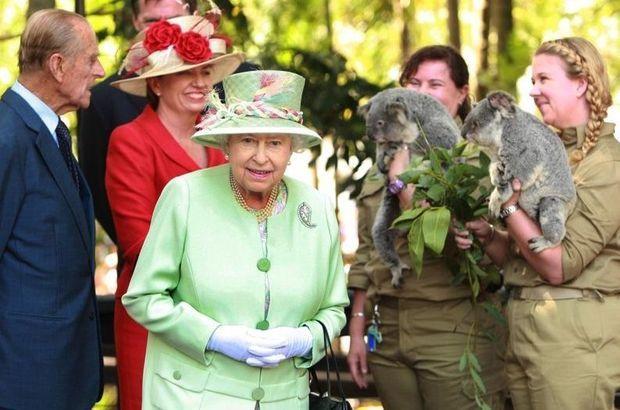 Reine Koala-