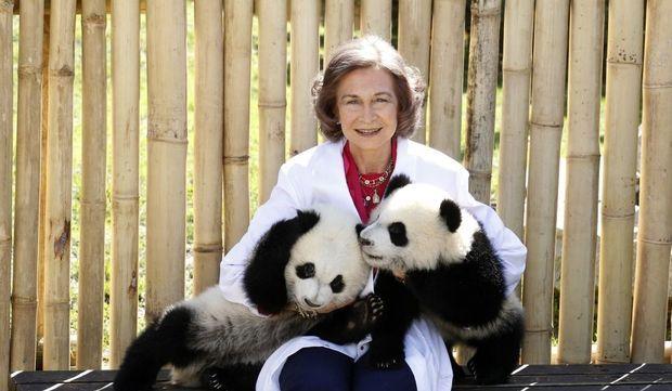 reine-panda-