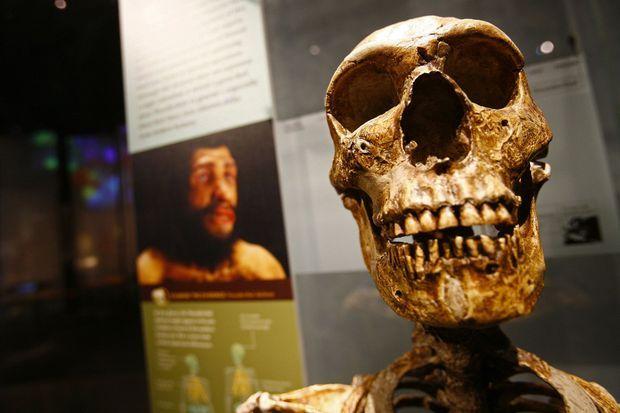 Un squelette d'homo sapiens sapiens.